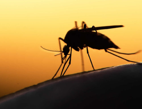 Venezuela estimated to have had 1 million new malaria infections in 2018